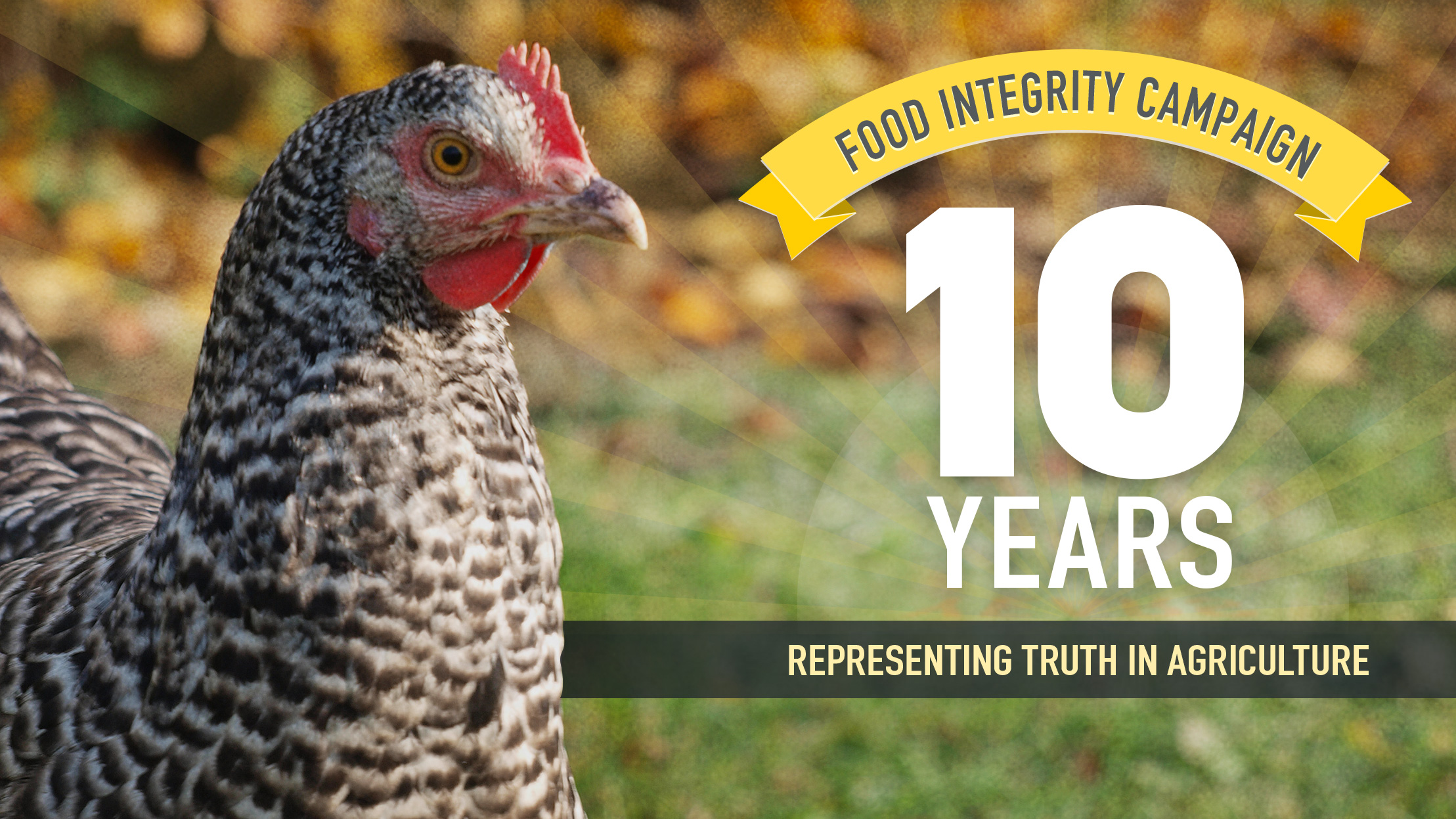Photo of a bold, speckled hen and text that reads: Food Integrity Campaign, 10 Years, Representing Truth in Agriculture
